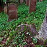 Ein überwachsener Grabstein, Foto: Carl-Robert Kümpers