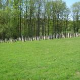 Jewish Cemetery in Kleinsteinach, photo: Rebekka Denz